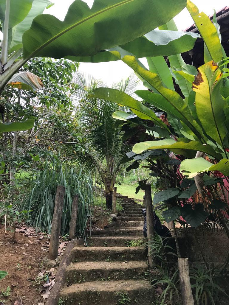 Casa Tambor - Paraty - Brésil - Helpx - Rio de Janeiro