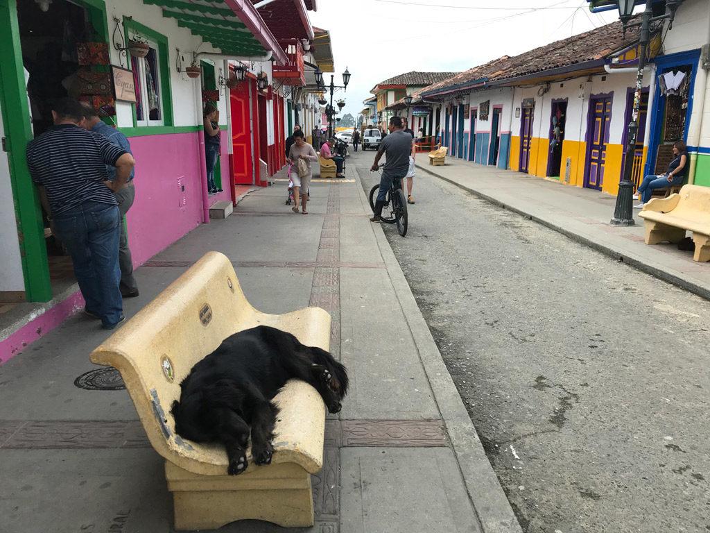 La vie de chien à Salento